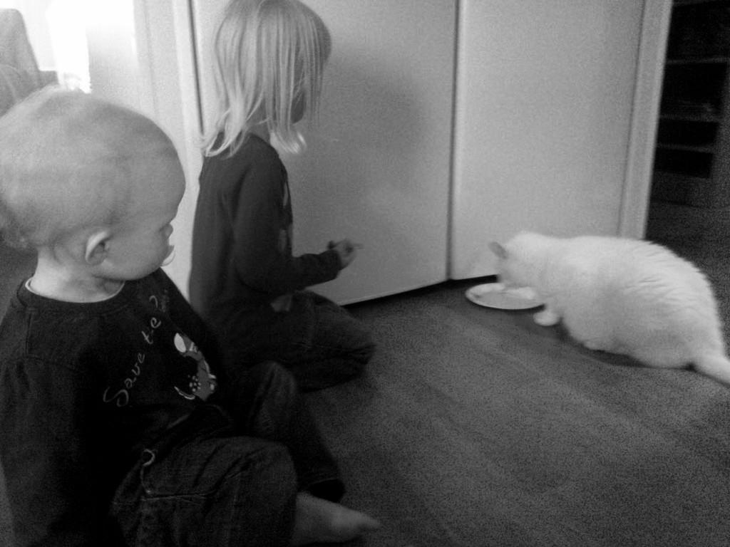 Murina-kissasta tuli heti uuden mummolan kiinnostavin yksityiskohta.