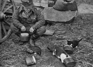 Suomalainen sotilas syöttää kissoja. Kuvaaja: tuntematon