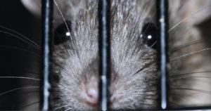 Rotta katsoo telkien takaa toisin kuin sananvapautta vastaan hyökkäävät Suomessa.