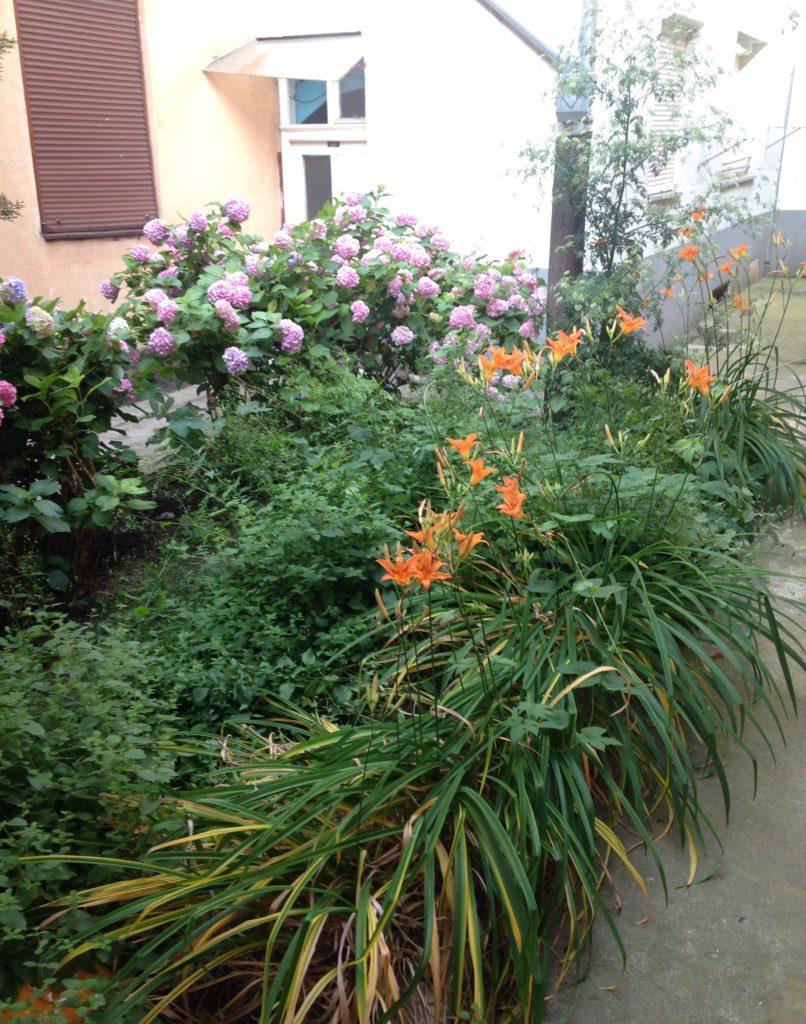 Tätä puutarhaa ei juuri tarvitse hoitaa.
