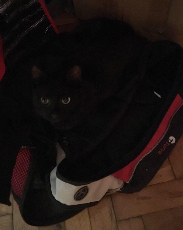 Kissanomistaja saa olla tarkkana, mistä kissansa löytää.