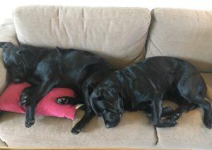 Tytöt päiväunilla. Armi (tyynyllä) ja sen ystävä Maya uuvahtivat metsäretken jälkeen.