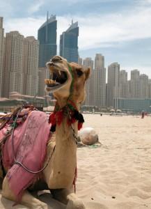 Dubai on rakennettu öljyrahoilla,