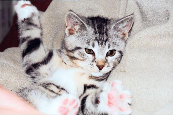 Kolmanneksi äänestettiin Otto-kissa.