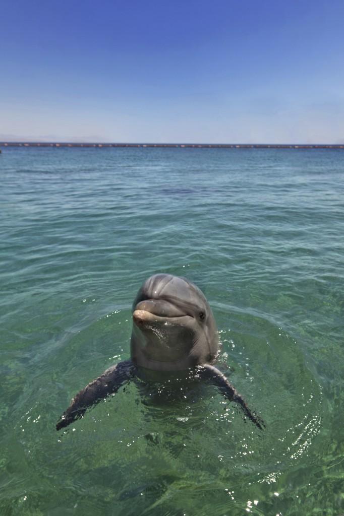 Delfiiniriutta on yksi Eilatin suosituimpia turistikohteita. Kuva: Israelin turistiministeriö.