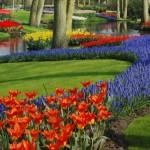 Hollannin kevät on kukkaloiston aikaa.