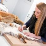 Marita Huurinainen leikkaa turkin suikaleiksi. Hän ompelee suikaleet tekemäänsä villapipoon.