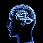 Evoluutiopsykologian mukaan luonnonvalinta on muokannut ihmismieltä.