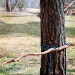 Riuku sidotaan puuhun siansorkka-solmuilla.