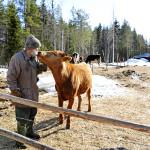 """""""Eläinlääkärit sanovat, ettei ole väliä, miltä eläimet näyttävät, kunhan määräykset tulee noudatettua"""", vanha isäntä kertoo."""