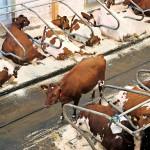 Maataloudessa kannustetaan investoimaan ympäristöystävälliseen teknologiaan.