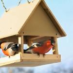 Auringonkukansiemenet ja pähkinät ovat sopivaa ruokaa lintulaudalle.