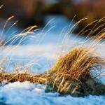 Pohjois-Suomessa tuulee muuta maata useammin etelästä.