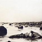 Kesällä 1921 Terijoen rantaan ajautunut ruumis. Kronstadtin kapinassa kuolleiden ruumiita ajautui rantaan pitkään jäiden lähdön jälkeen.