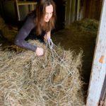 Rita Peltola nostelee tallinvintin ylisiltä hevosille seuraavan päivän heinäannosta.