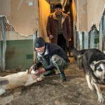 Subbotkinan tarhalla on neljä työntekijää hänen itsensä lisäksi. Juri Rodionov (etualalla) työskenteli Subbotkinan koiratarhassa vuonna 2013, mutta ei ole siellä enää. Työntekijöiden vaihtuvuus on suurta.