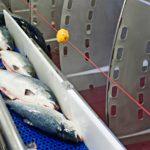 Kala on Norjassa miljardiluokan bisnes.