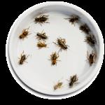 Hyönteisiä voidaan käyttää vaikka pitsan täytteenä.