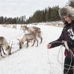 Poromies Juha Kujala Kuusamosta näyttää, kuinka suopungin heitto tehdään oikeaoppisesti.