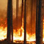 Metsän polttamisen tavoitteena on palauttaa aiemmin talousmetsänä ollut alue luonnontilaisen kaltaiseksi.