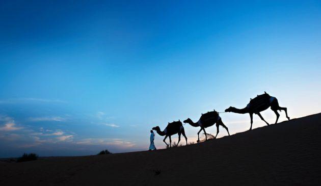 Kameleita aavikolla