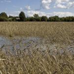 Rajujen sateiden jälkeen tarvitaan useampi perättäinen poutapäivä, että pelloille voidaan edes mennä.