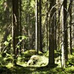 Kaupunkien laajoilla metsämailla on positiivisia vaikutuksia asukkaiden hyvinvointiin.