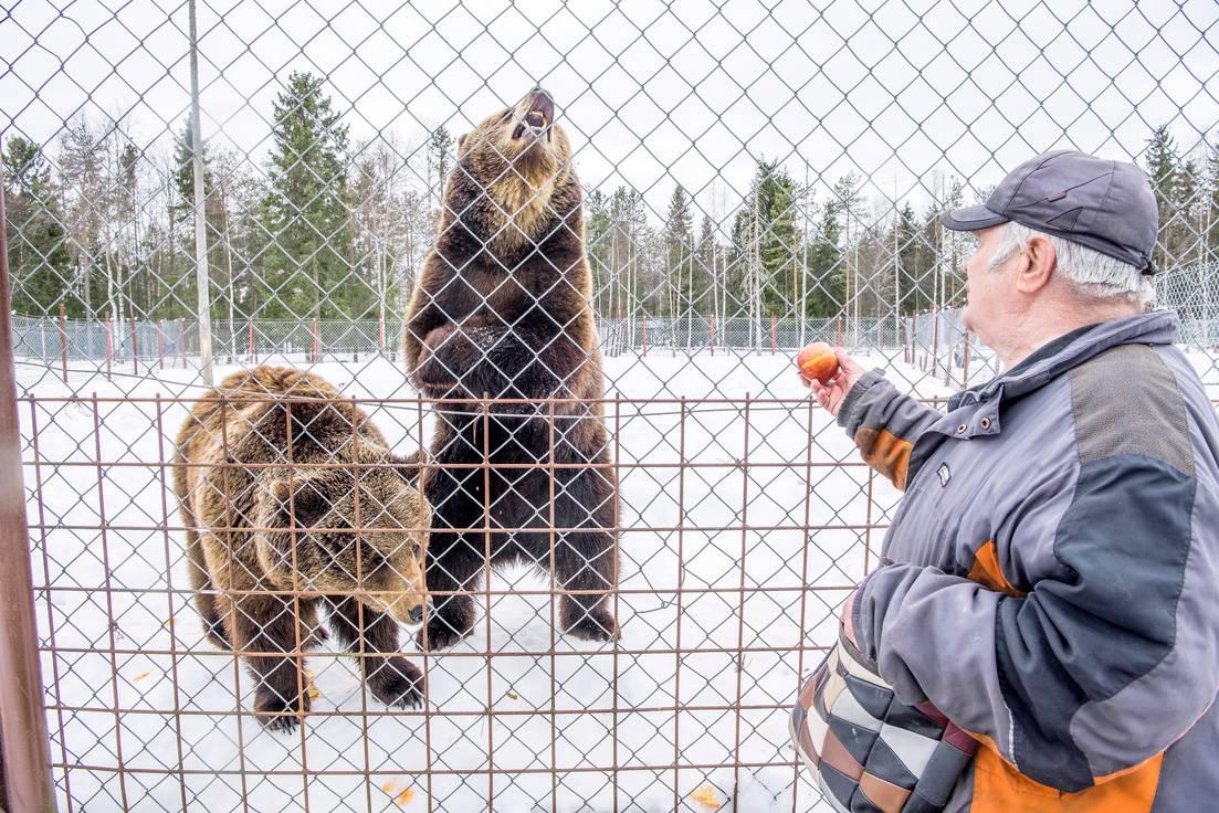 Sulo Karjalainen syöttämässä karhuja.