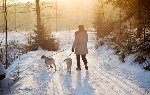 Nainen ulkoiluttaa koiria