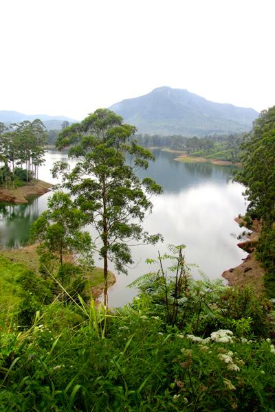 Sri Lankan vihreä luonto