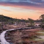 Kesäilta Torronsuon kansallispuistossa Kanta-Hämeessä.