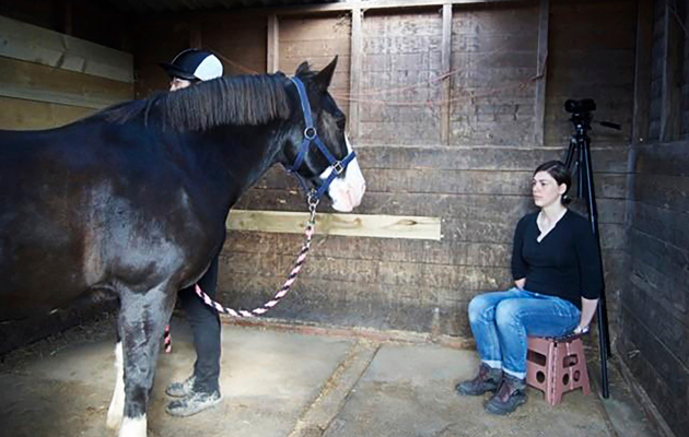 Hevosen kasvojentunnistus