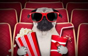 Koirat pääsevät elokuviin