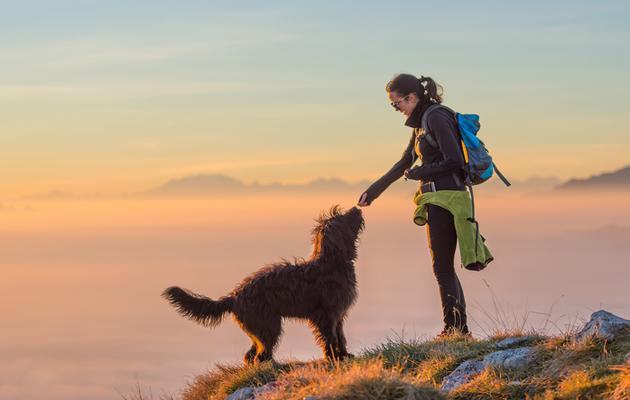 Koira ja matkustus
