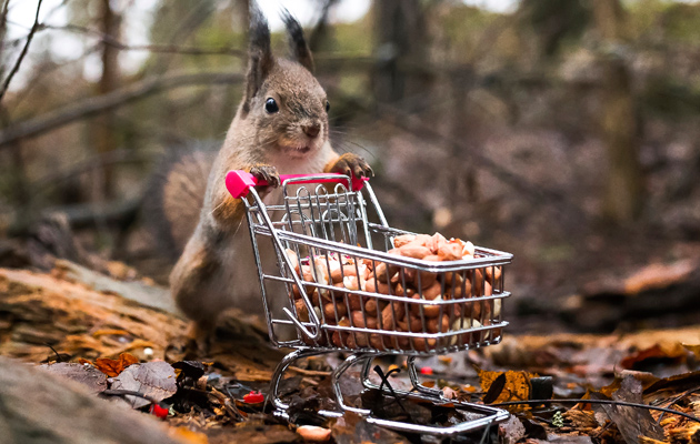 Orava ja ostoskärry