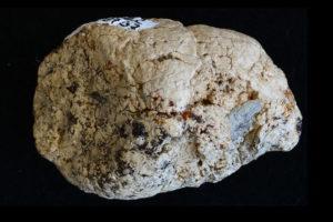 Villikoiran fossiloitunut uloste löytyi Kaliforniasta Yhdysvalloista. Oikealla alhaalla oleva harmaa luunsiru on tuntemattomasta eläimestä.