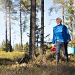 Hyvät marjapaikat Raahen metsissä ovat tulleet Aimo Karppiselle tutuiksi vuosien varrella.