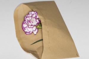 Kuvituskuva: palkkakuoressa on kukka.