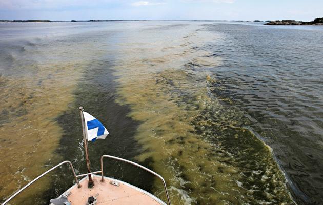 Sinilevä on Itämeren riesa