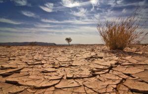 Kun kuivuus on ankaraa, luonnon ekosysteemi on koetuksella.