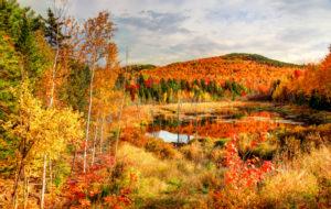 Ruska värittää metsän upeisiin väreihin.
