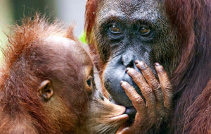 Eläinten supervanhemmat