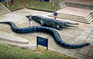 Krokotiilit vastaan käärmeet
