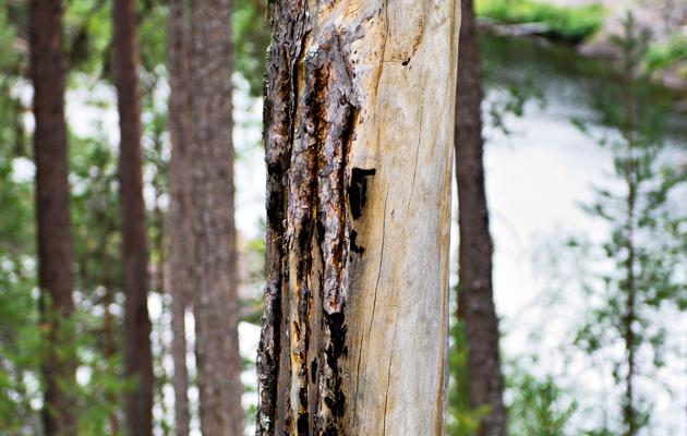 Puut ja kulotus