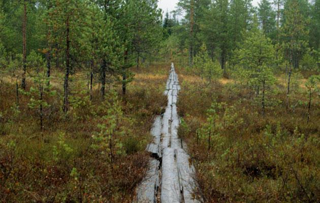 Työtön määrättiin työtoimintaan, jossa hän kantoi pitkospuita metsässä.