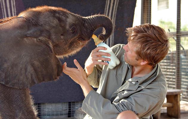 Elefanttivauvan tarina