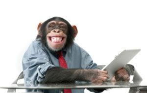 Simpanssi on yllättävän kiinnostunut television katselusta.