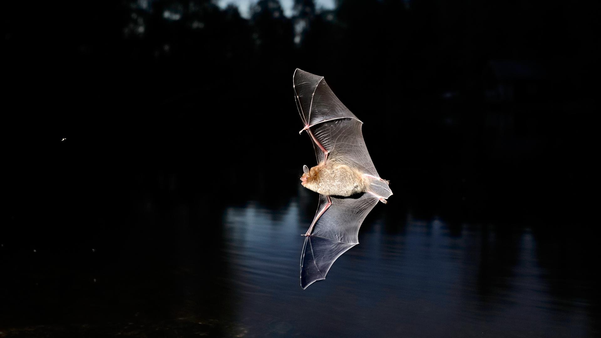 Vesisiippa lentää