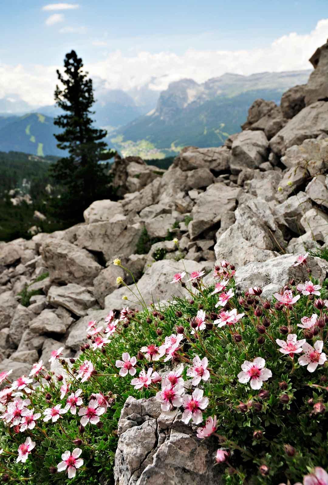 Dolomiittien vuoristo