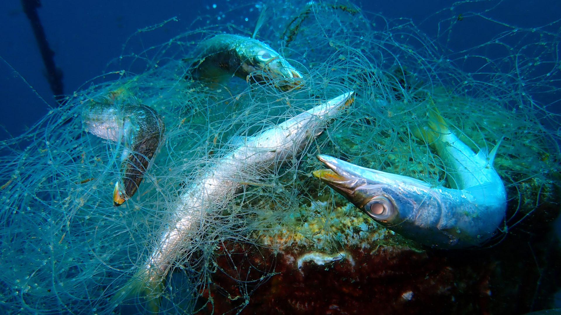 Haamuverkot ovat hylättyjä pyydyksiä, jotka jatkavat kalastamista merenpohjassa.